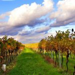 Urlaub bei YLVIE_ Wandern_Weingarten