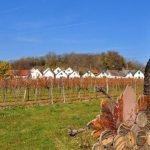 Urlaub bei YLVIE_Wandern_ Kellergasse in Wildenduernbach